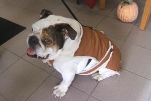 Winston (Winnie)