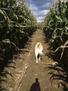 Emma in a cornfield